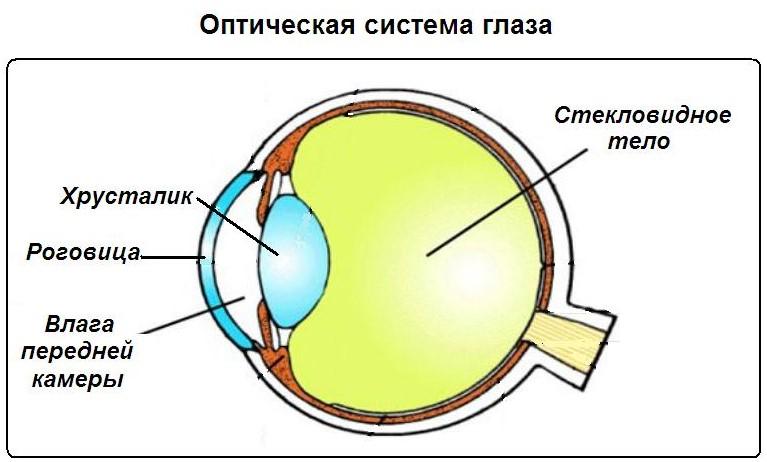 Система глаза
