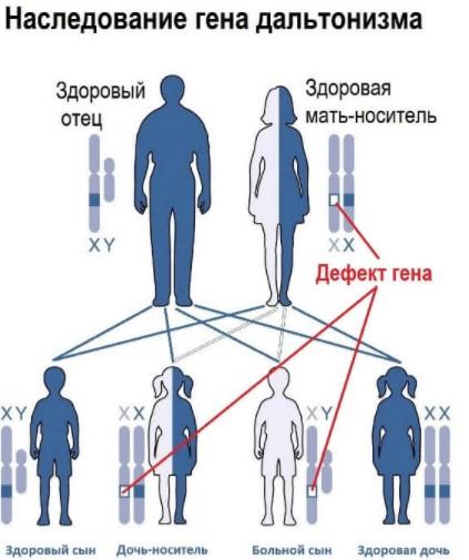 Наследование гена дальтонизма