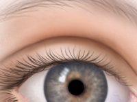 Веки глаза